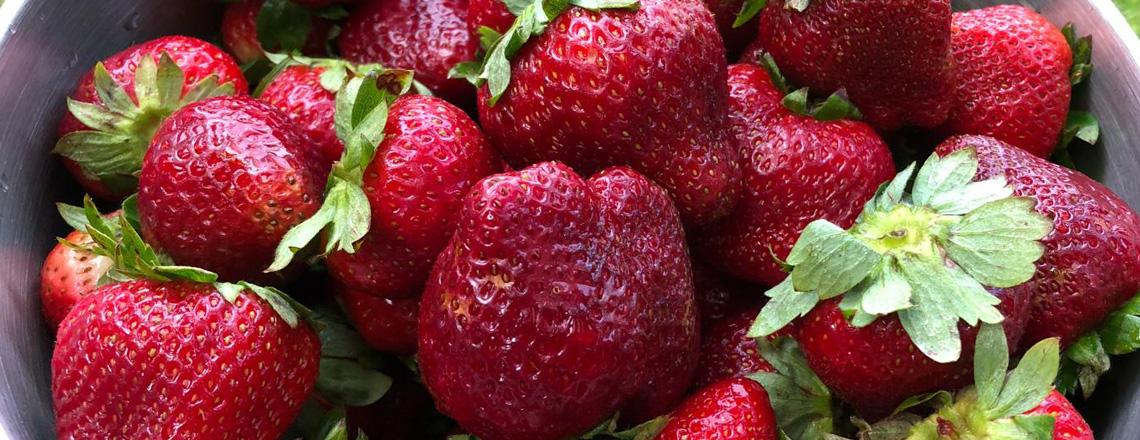 ¿Sabías que algunas plantas de frutilla llegan desde California?